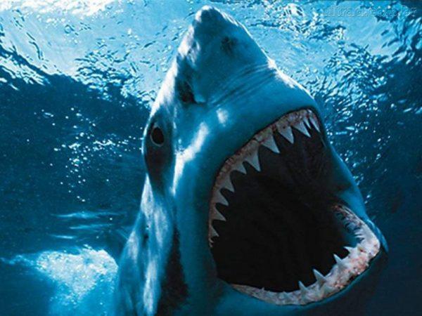 Tubarões Selvagens
