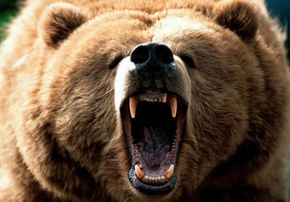 Caracteristicas do Urso