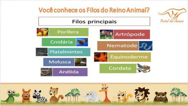 Classificações Inferiores dos Animais
