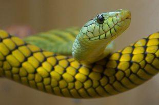 Características da Serpente