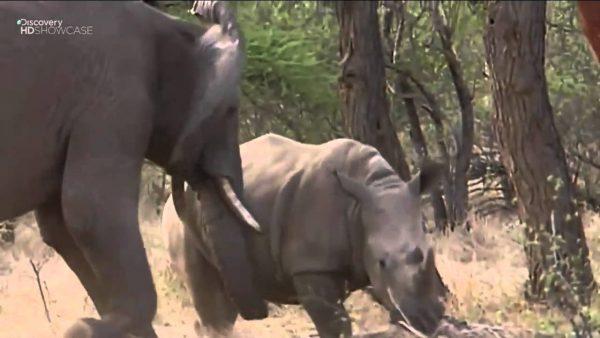 Elefante e Hipopótamo