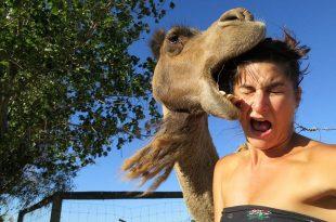 Camelo Mordendo Mulher
