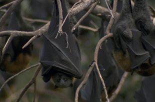 Tudo Sobre os Morcegos