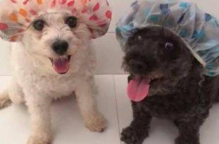 Cachorrinhos Pronto Para o Banho