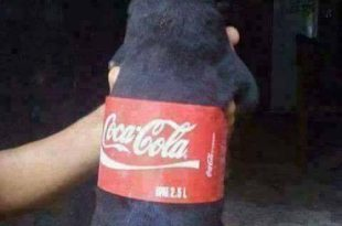 Coca-cola Pet Cachorrinho