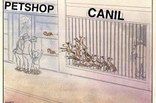 Diferença Entre Cachorros Petshop e Canil
