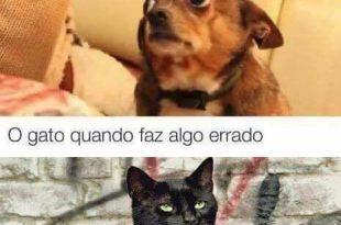 Gato e Cachorro Quando Fazem Algo Errado