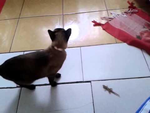 Lagartixas e Gatos