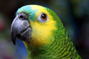 Tudo Sobre Papagaio