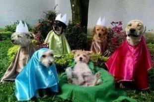 Santa Ceia dos Cachorrinhos