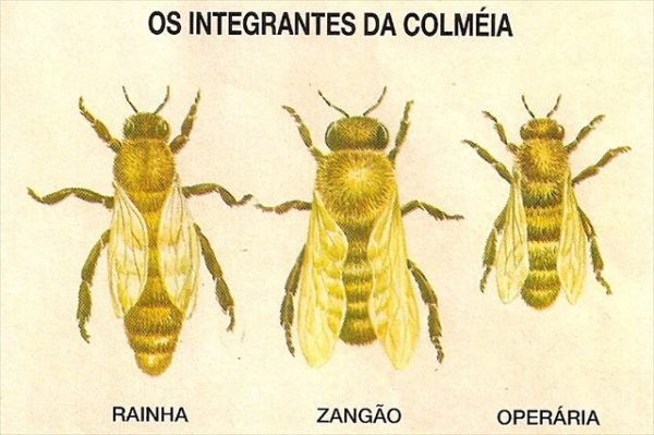 Integrantes da Colméia
