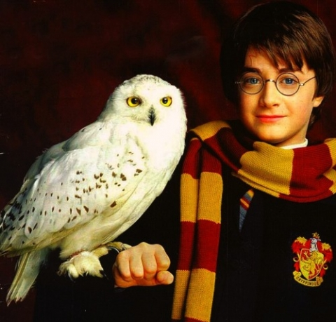 Coruja Harry Potter