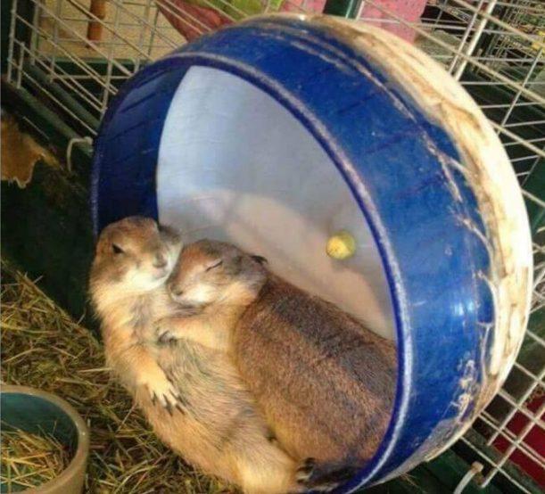 Ela Dormiu no Calor dos Meus Braços...