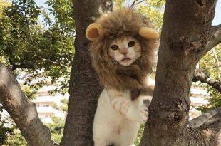 Gatinho ou Leão?