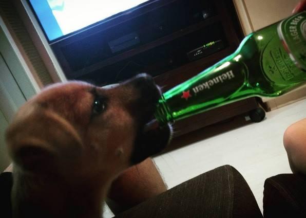 Sábado é Dia de Maldade e Cerveja