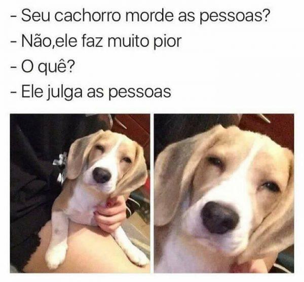 Cachorro Julga as Pessoas