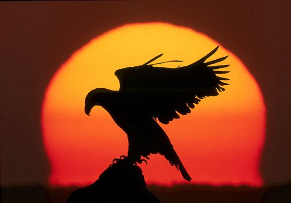 Águia e o Sol