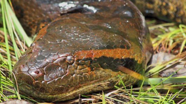 Características da Anaconda