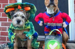 Cães fantasiados Halloween
