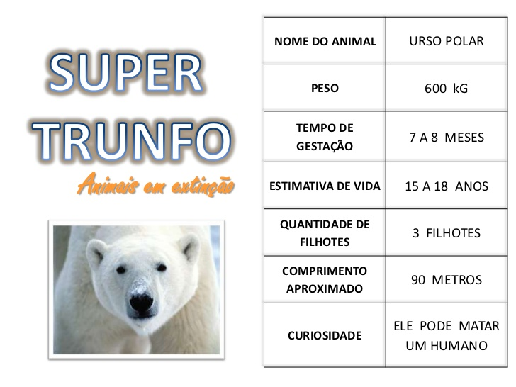 Características do Urso Polar