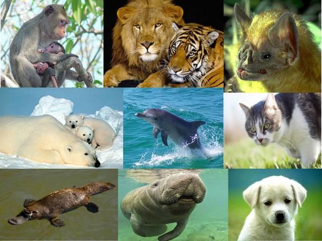 Exemplos de Animais Mamíferos