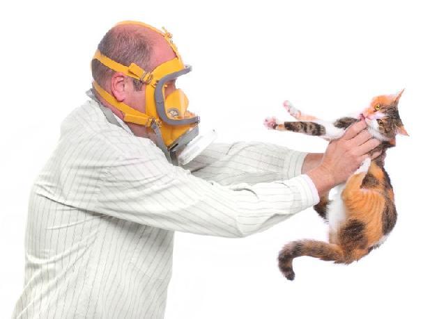 Homem Com Alergia a Gato