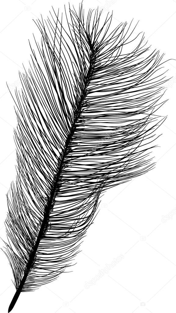 Pena de Avestruz da Somália