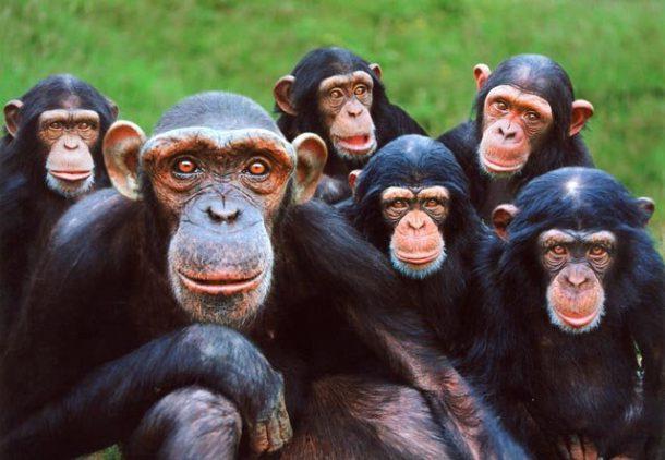 Exemplos de Primatas