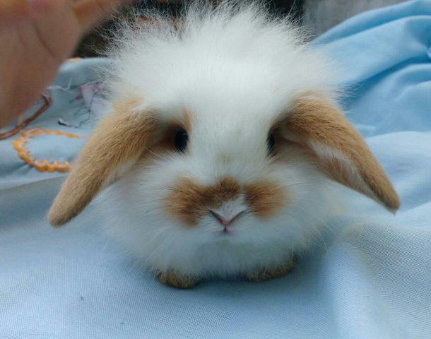 Mini Coelho Fuzzy