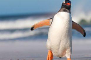 Tudo Sobre Pinguim