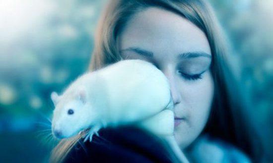 Os Ratos Atacam Pessoas? Onde Ficam Durante O Dia?
