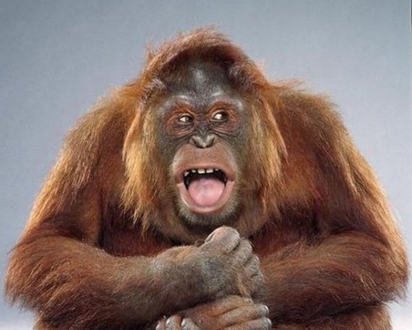 Tipos De Primatas