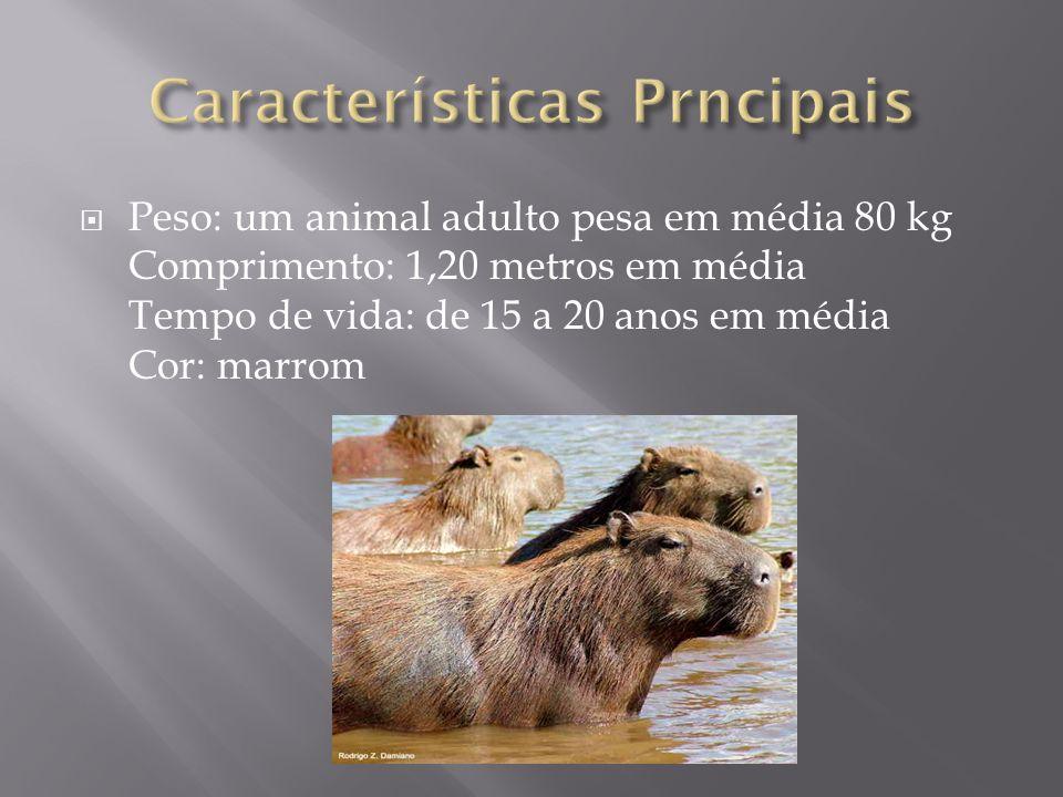 Características da Capivara