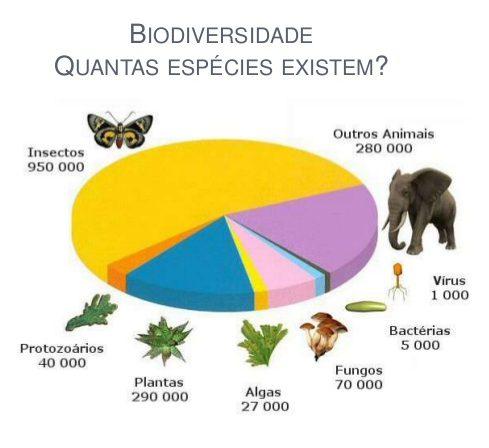 Classificação das Espécies