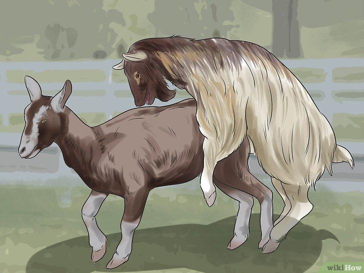 Imagem Ilustrativa da Cabra Cruzando