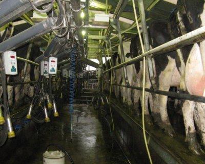Produção de Leite da Vaca Holandesa