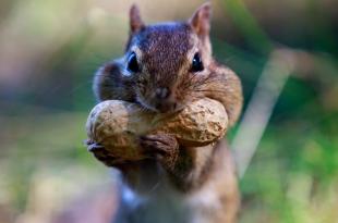 Alimentação Do Esquilo