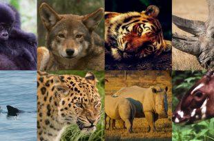 Animais Estão em Extinção