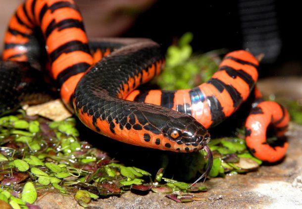 Cobras e Serpentes