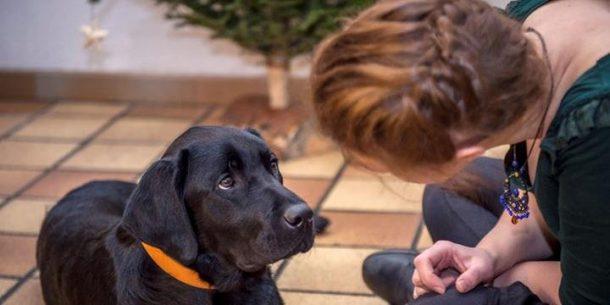 Comunicação com os Cachorros