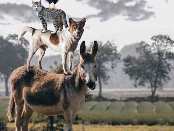 Curiosidades do Reino Animal