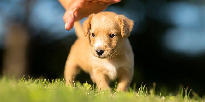 Filhotes de Cachorro: Cuidados, Compra, Raças