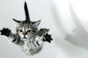 Gatos Caem em Pé
