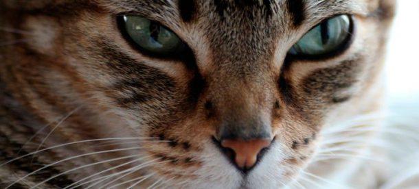 Gatos Pensando