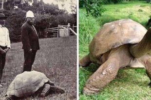 Jonathan - A tartaruga