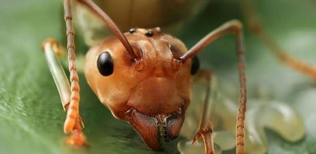 Olhos Formiga