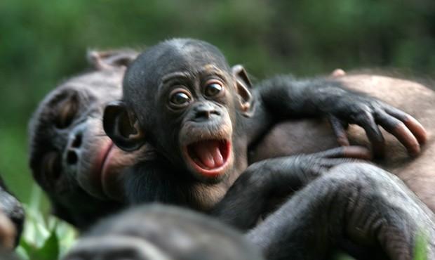Primatas Parecidos Conosco