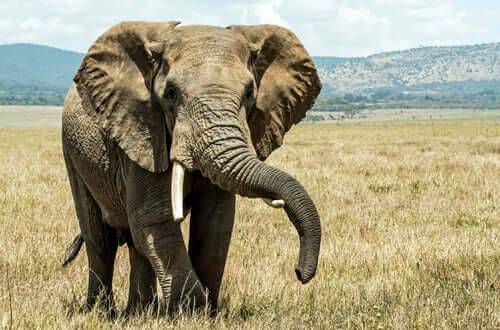 Tromba do Elefante