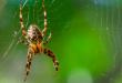 Quais Aranhas São Venenosas?