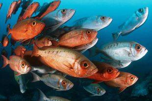 Peixes